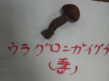 uraguronigaiguchi.jpg